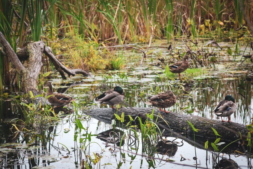 Broadmoor Wildlife Sanctuary TWG-7.jpg