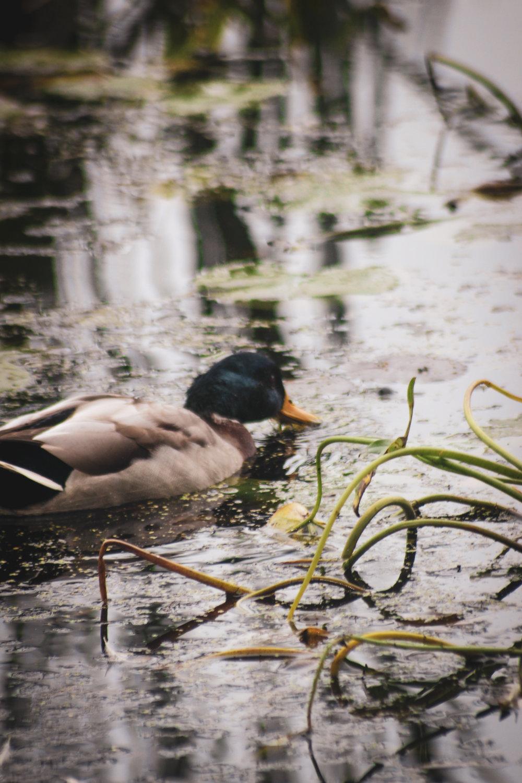 Broadmoor Wildlife Sanctuary TWG-8.jpg
