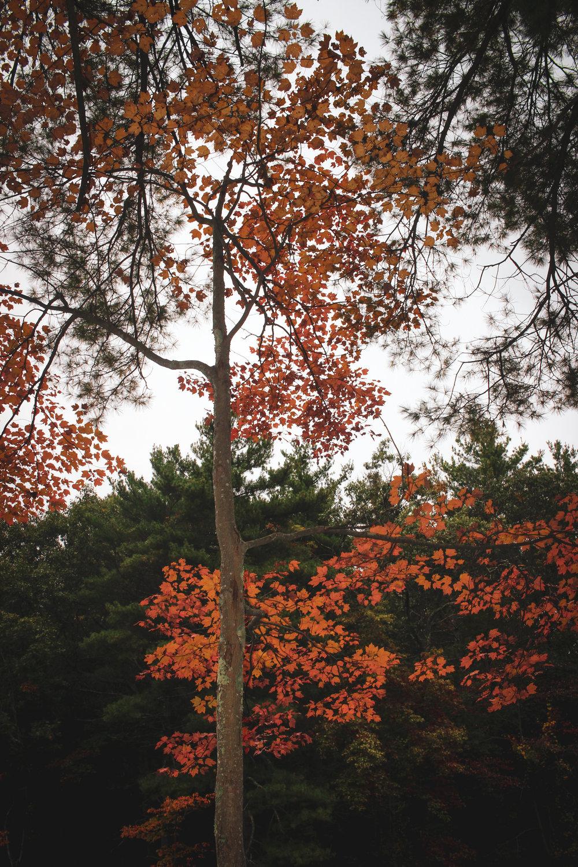 Broadmoor Wildlife Sanctuary TWG-17.jpg