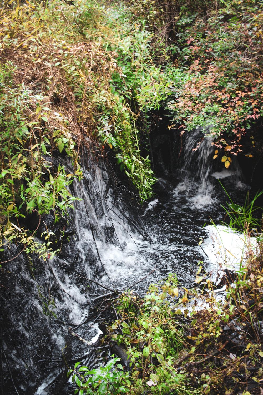 Broadmoor Wildlife Sanctuary TWG-18.jpg