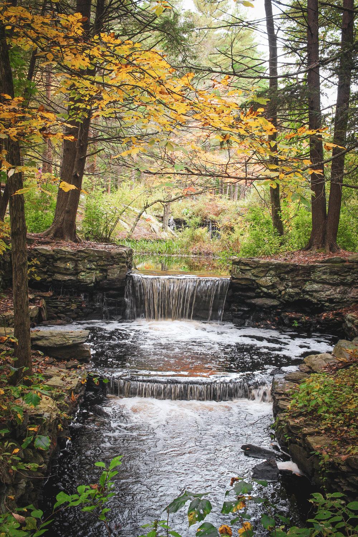 Broadmoor Wildlife Sanctuary TWG-19.jpg