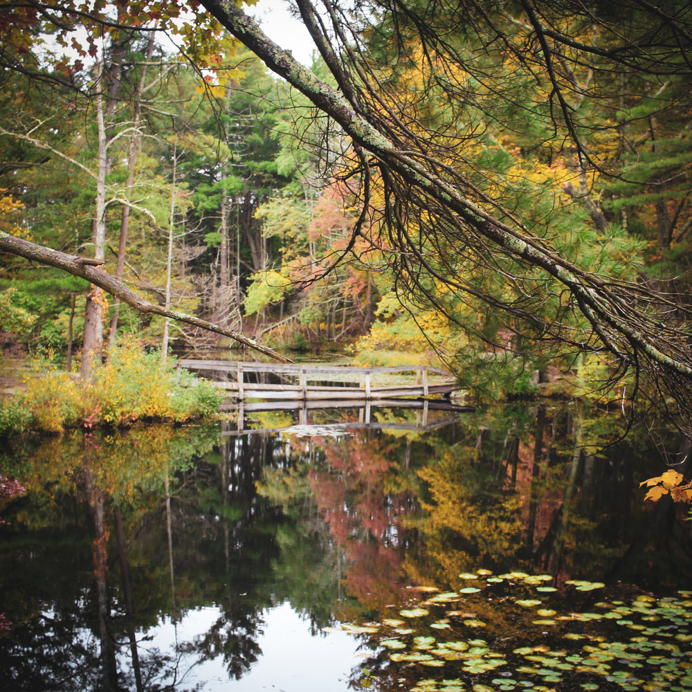 Broadmoor Wildlife Sanctuary TWG-26.jpg
