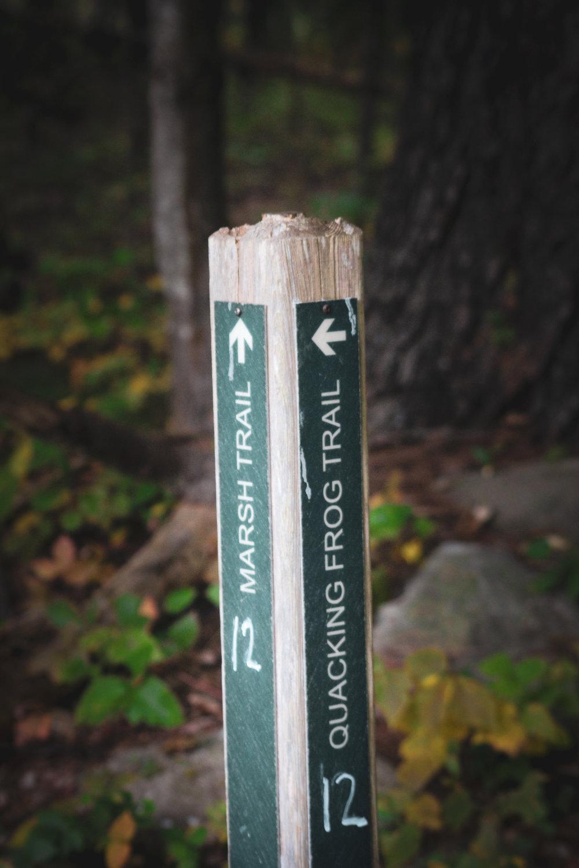 Broadmoor Wildlife Sanctuary TWG-31.jpg