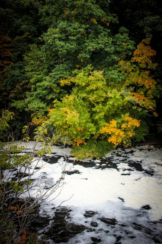 Hemlock Gorge Reservation TWG_.jpg