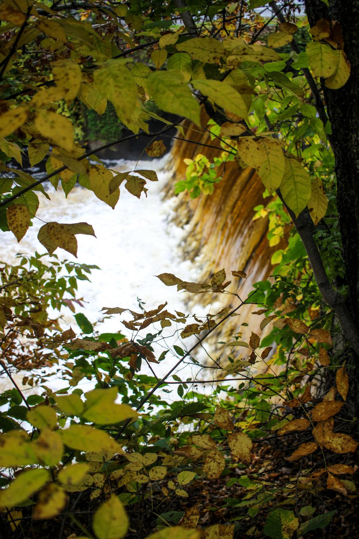 Hemlock Gorge Reservation TWG_-5.jpg