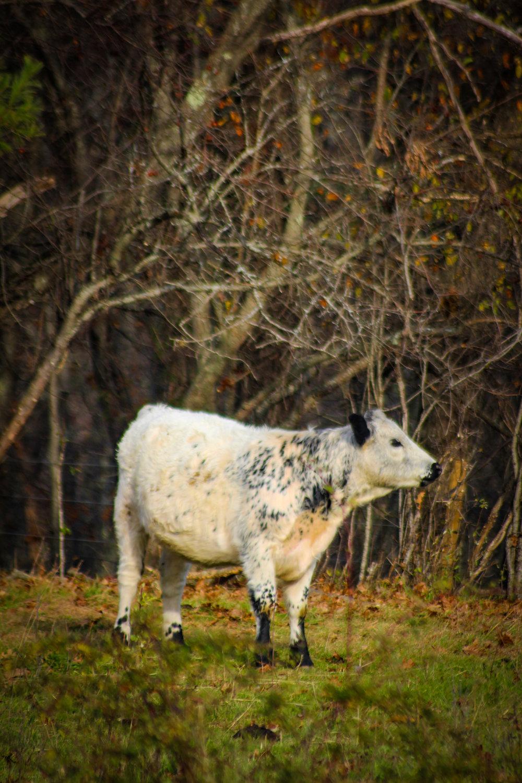 Moose Hill TWG-79.jpg