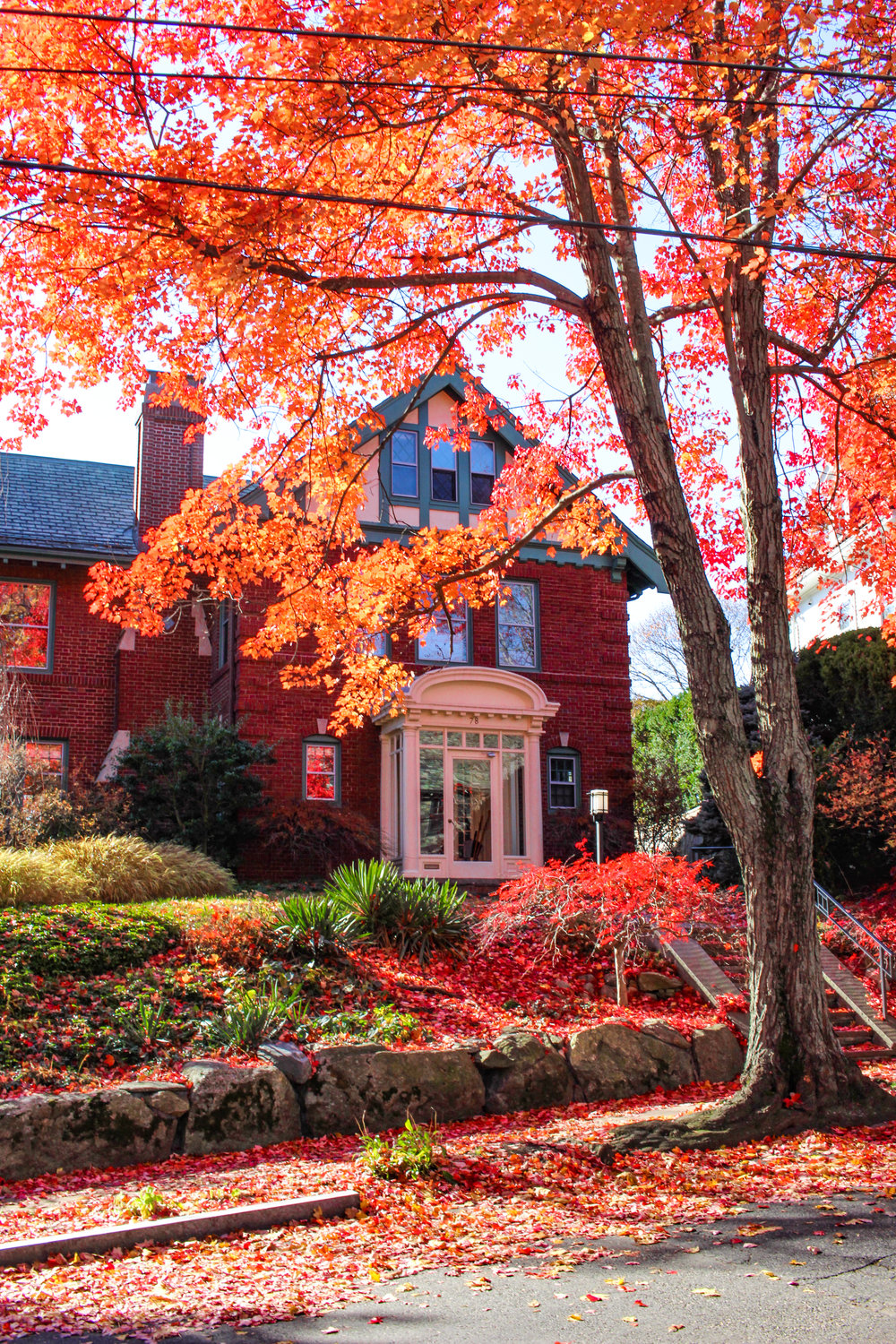 Brookline Red Foliage TWG_.jpg