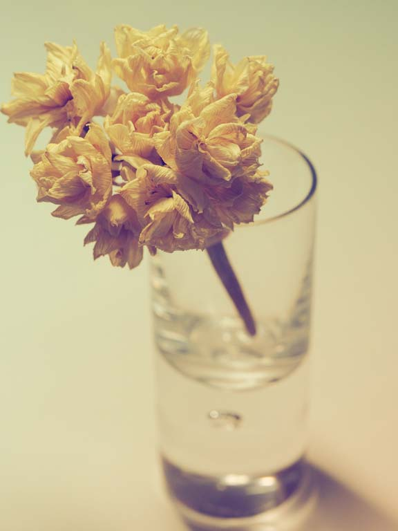 photography tips using shot glass as a tiny vase