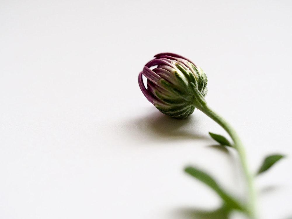 A little flower bud - Designed by Jess Coffs Harbour.jpg