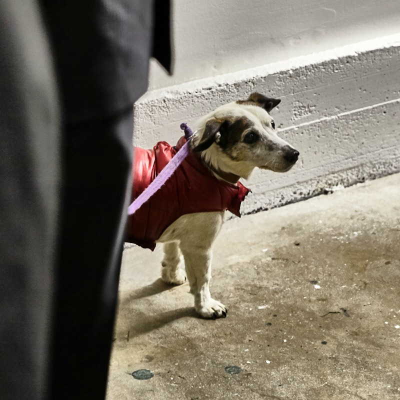 Marley, the doggy.