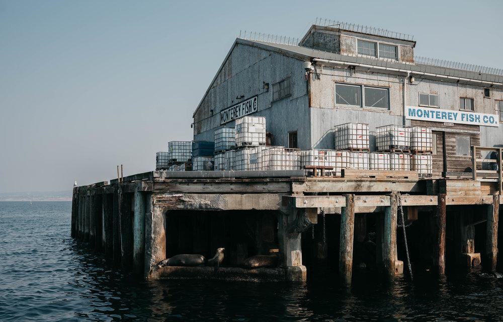 Monterey14.jpg
