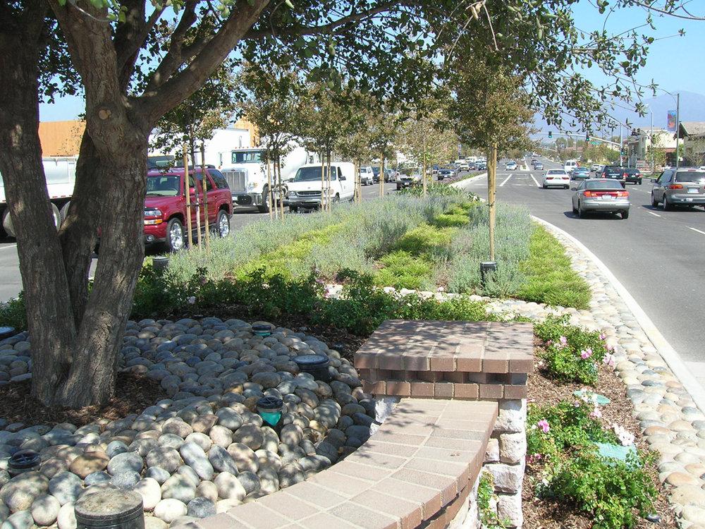 ArbElToro-Psomas-mediantree.jpg