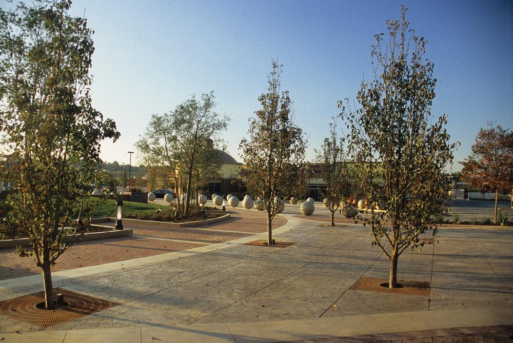 Xngs-pavingtrees.jpg