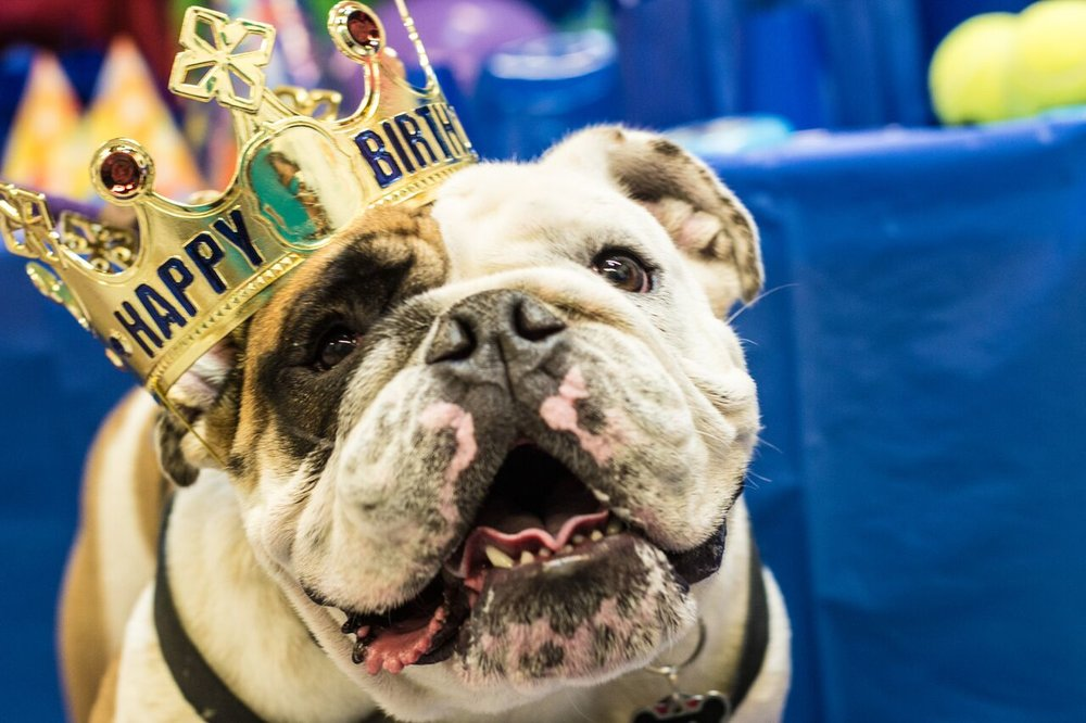5 Reasons to Throw Your Dog a Birthday Party  - Blog Post for Michelson Found Animals. READ HERE