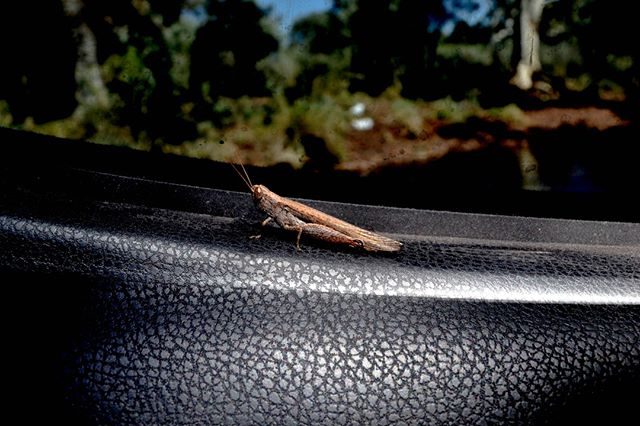 This little guy wanted to come along for the ride. . . . . . . . #freeride #freetowander #travelbuddy #friends #backpacker