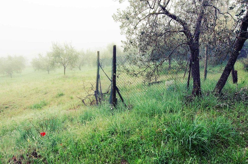 Tuscany #2323