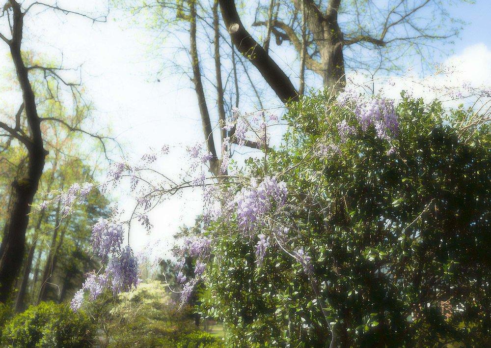 Trees #L0257