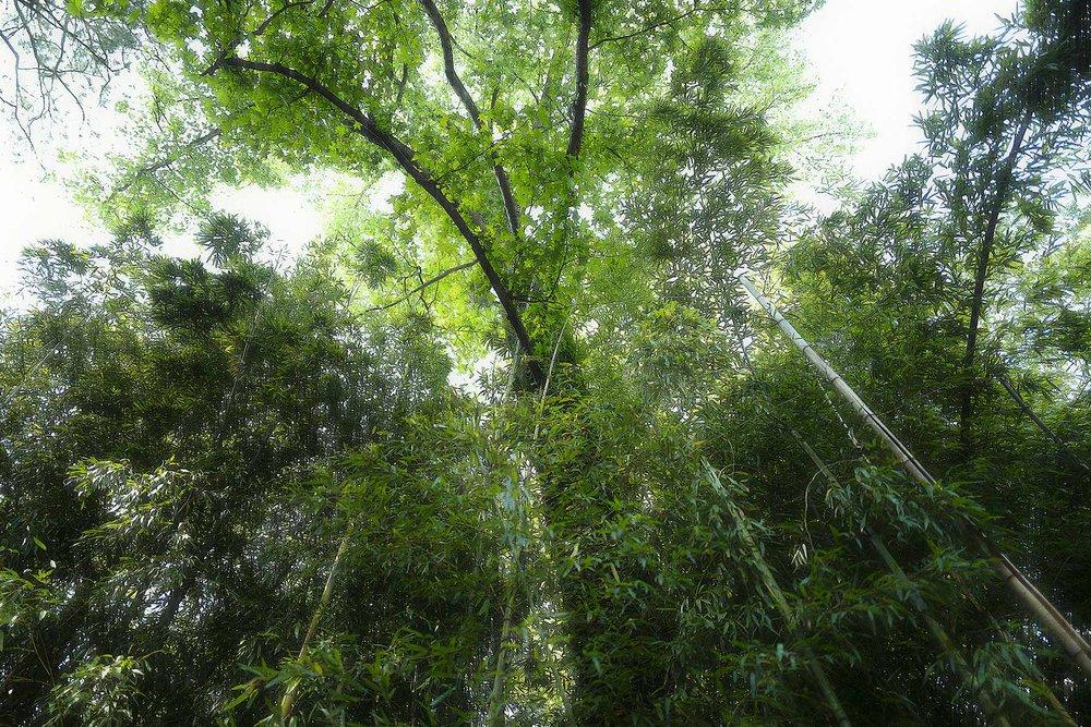 Trees #L-0428