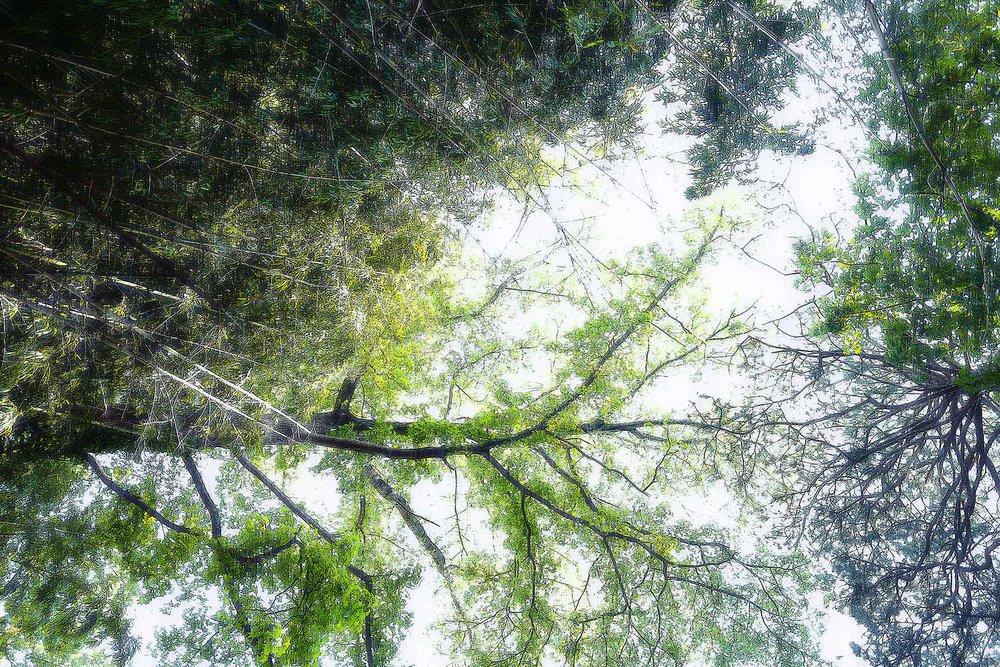 Trees #L-0448