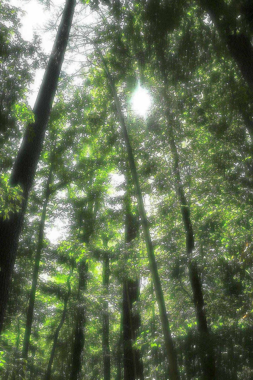 Trees #L-0458
