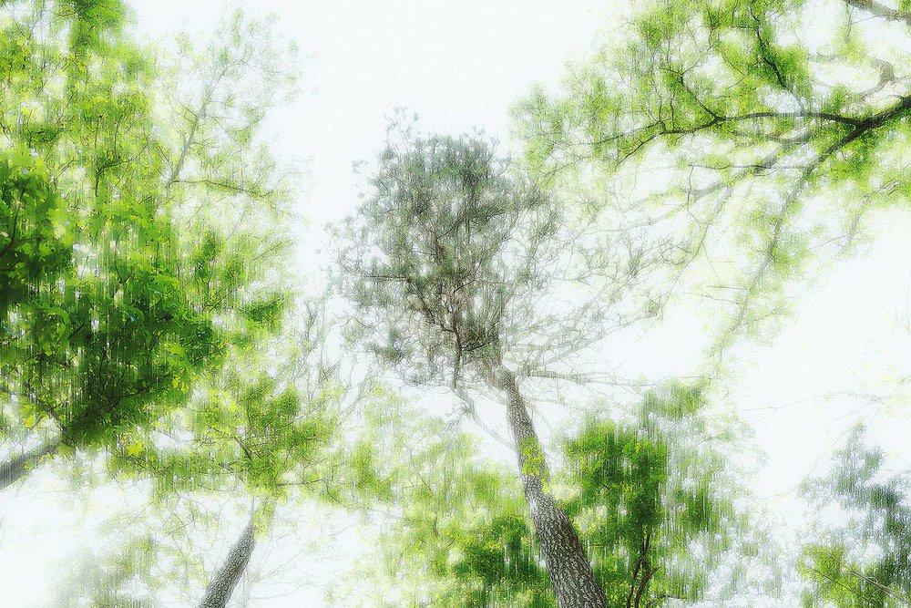 Trees #L-0465