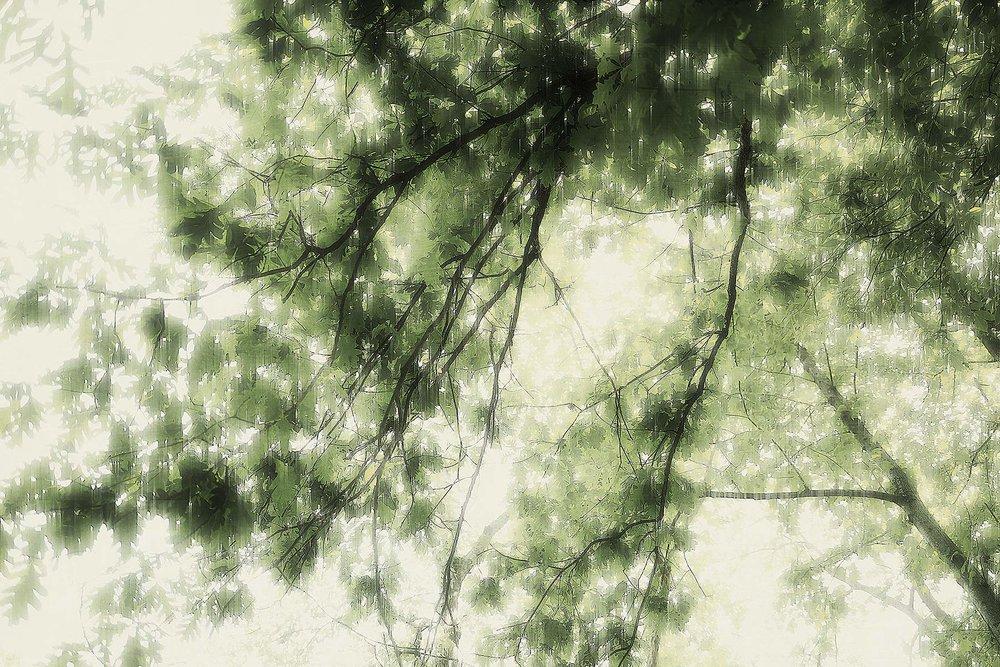 Trees #L-0481
