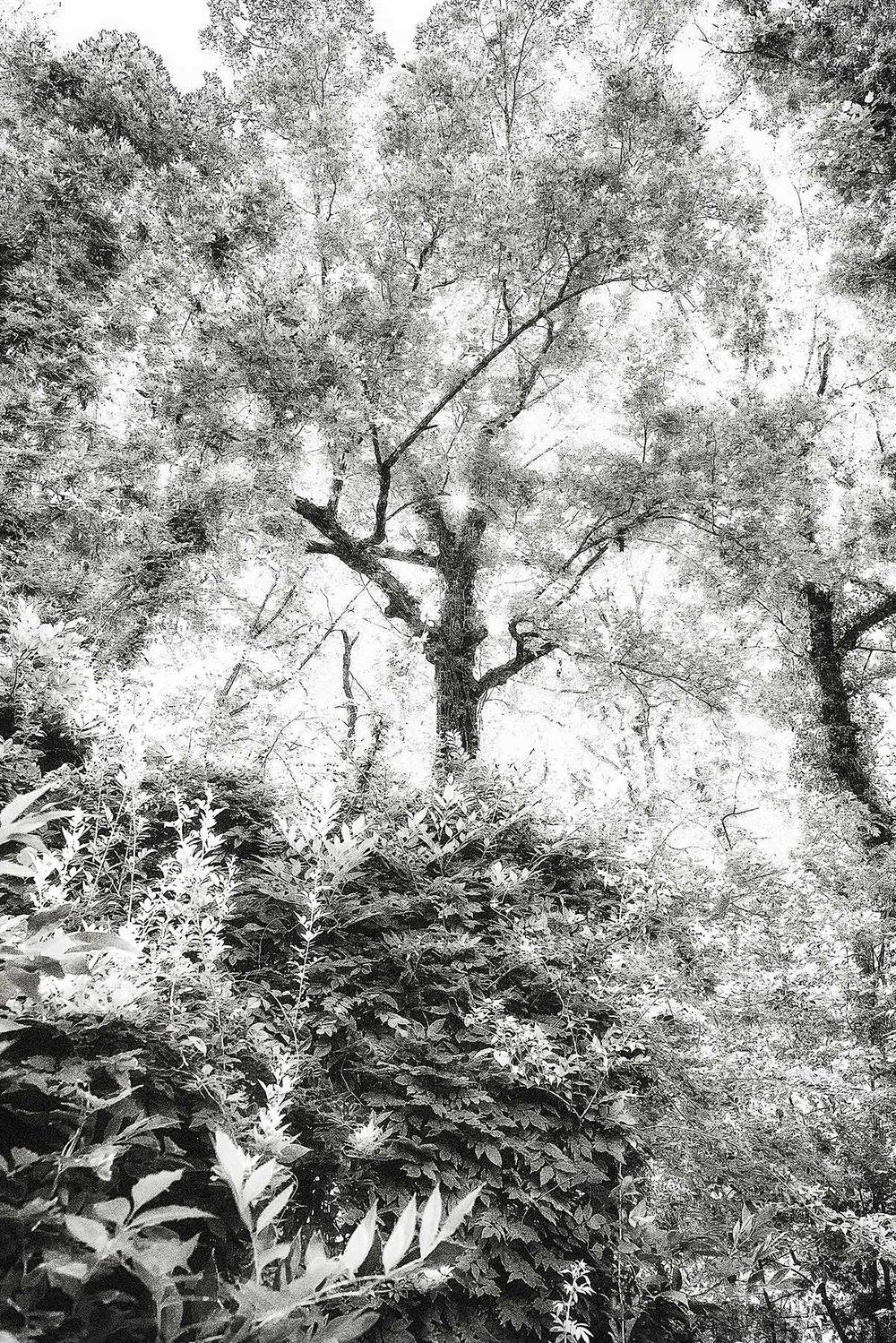 Trees #2441