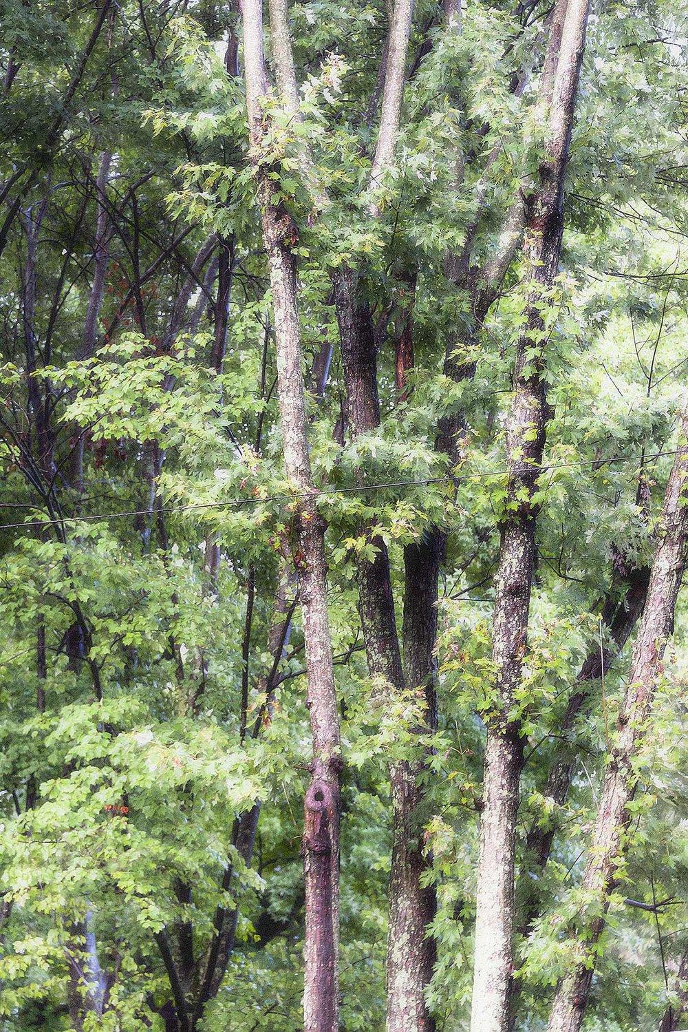 Trees #NAT2428