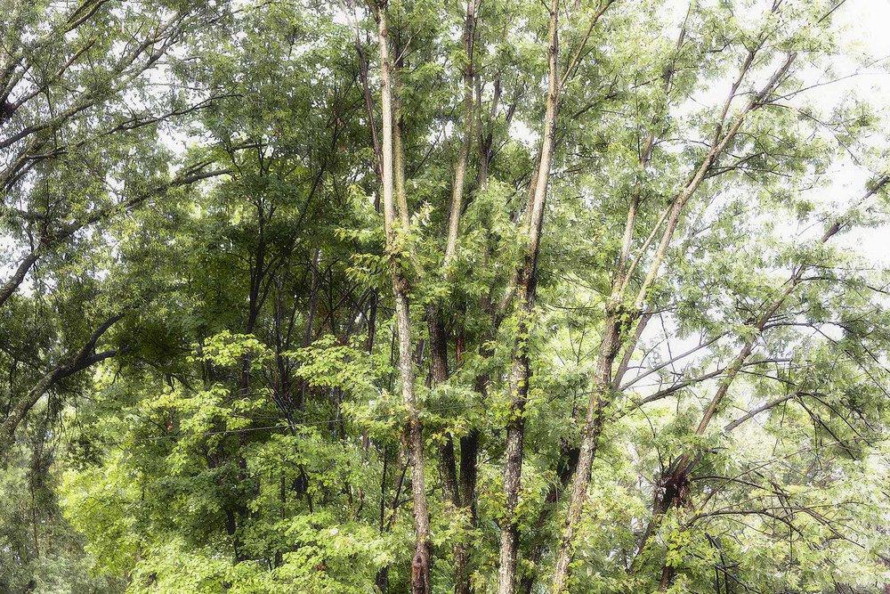 Trees #NAT2423