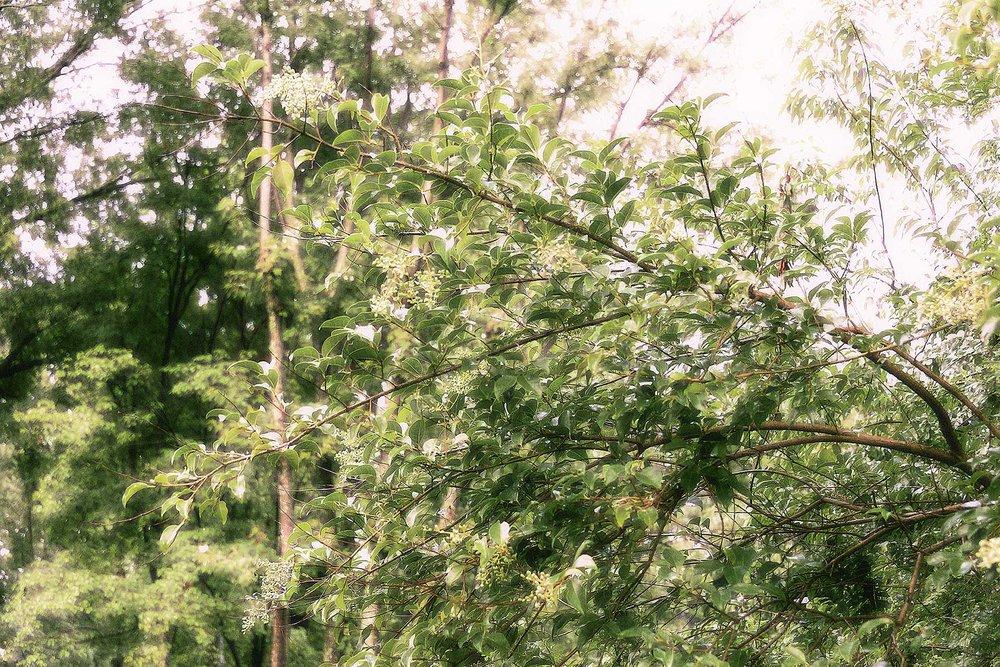 Trees #NAT2448