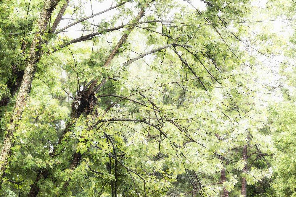 Trees #NAT2493