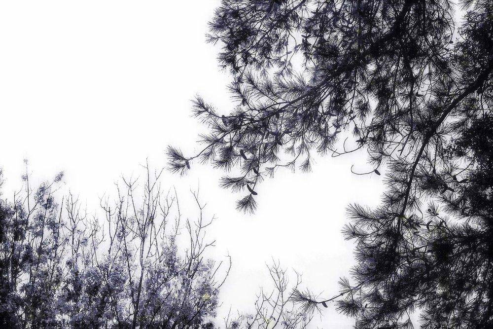 Trees #NAT2414