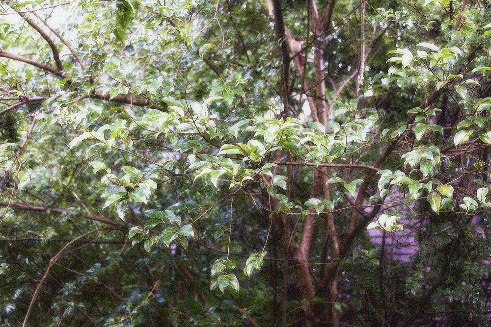 Trees #NAT2450