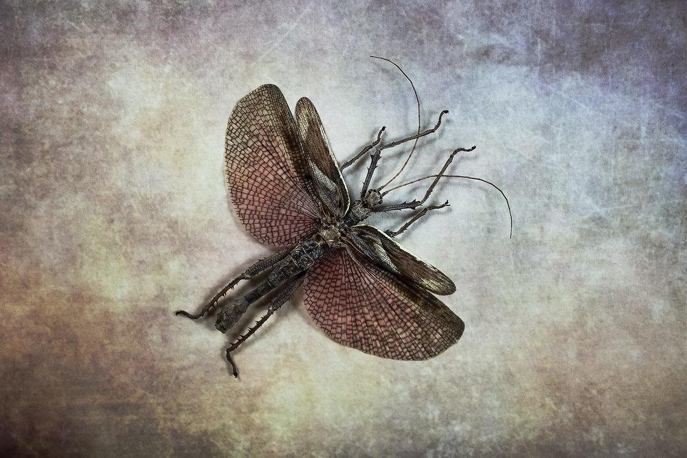 Bugs #L-0052