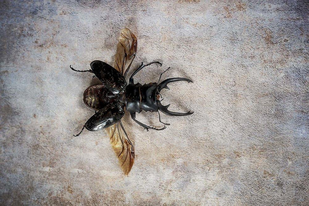 Bugs #L-0058