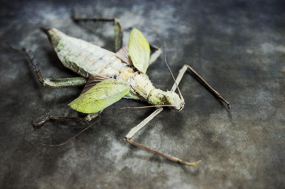 Bugs #L-0049