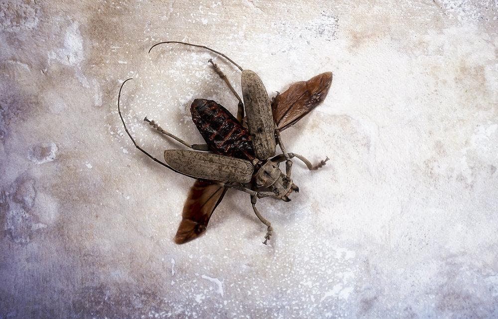 Bugs #L-0067