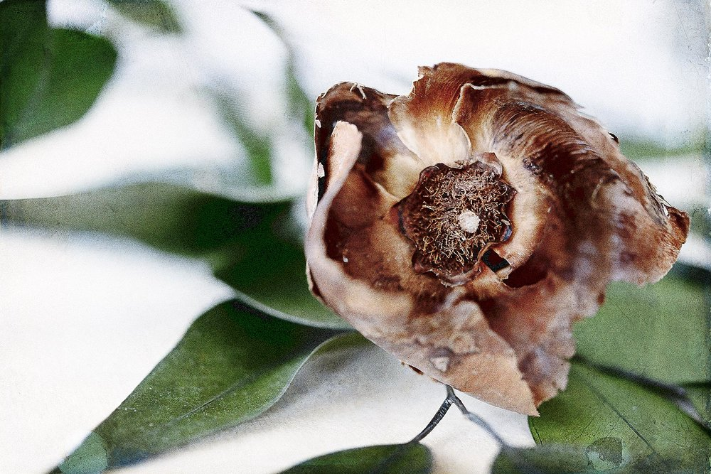 Botanical #D0266