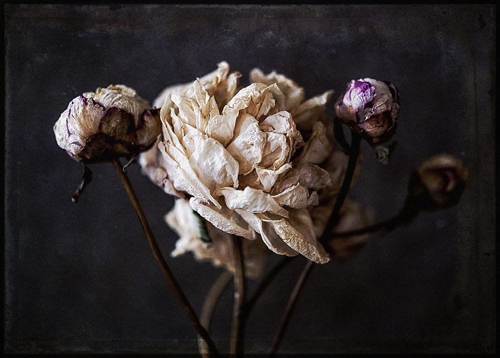 Botanical #D0574