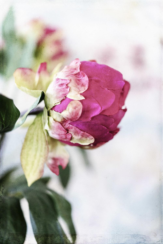 Botanical #D0624