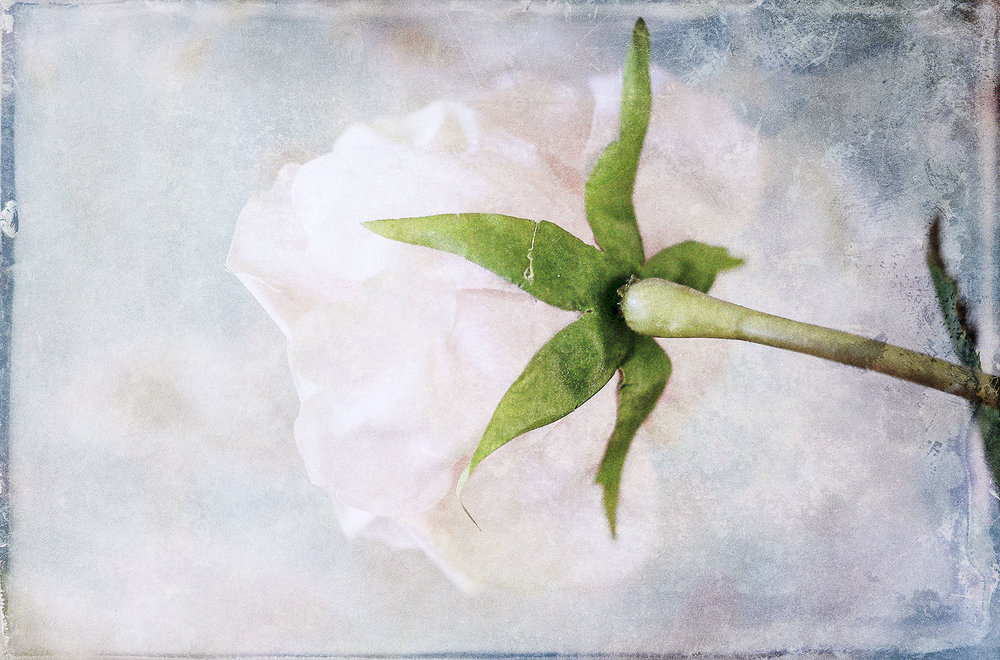 Botanical #D0631