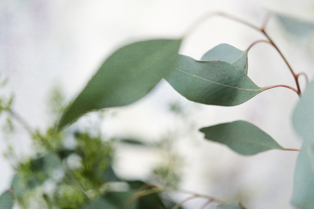 Botanical #D0819