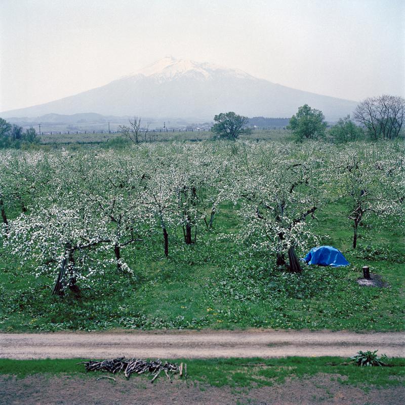 Orchard and Mt. Iwaki, Spring, Aomori Prefecture