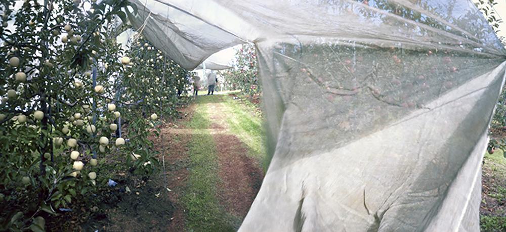 Light-Filtering Net #2, Fall, Aomori Prefecture