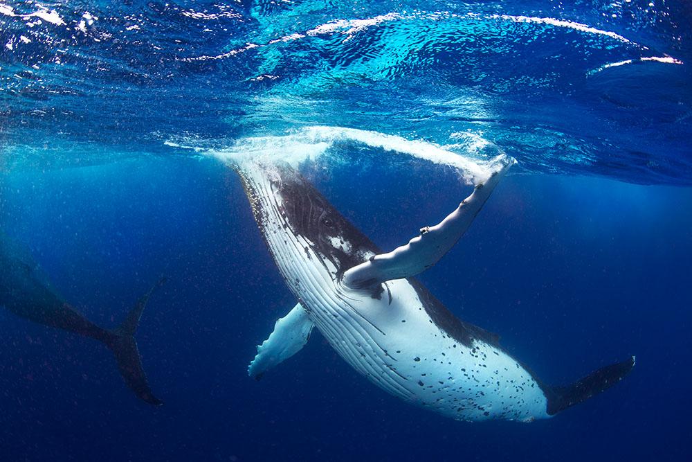 Whale_Swinging_Arm 2.jpg
