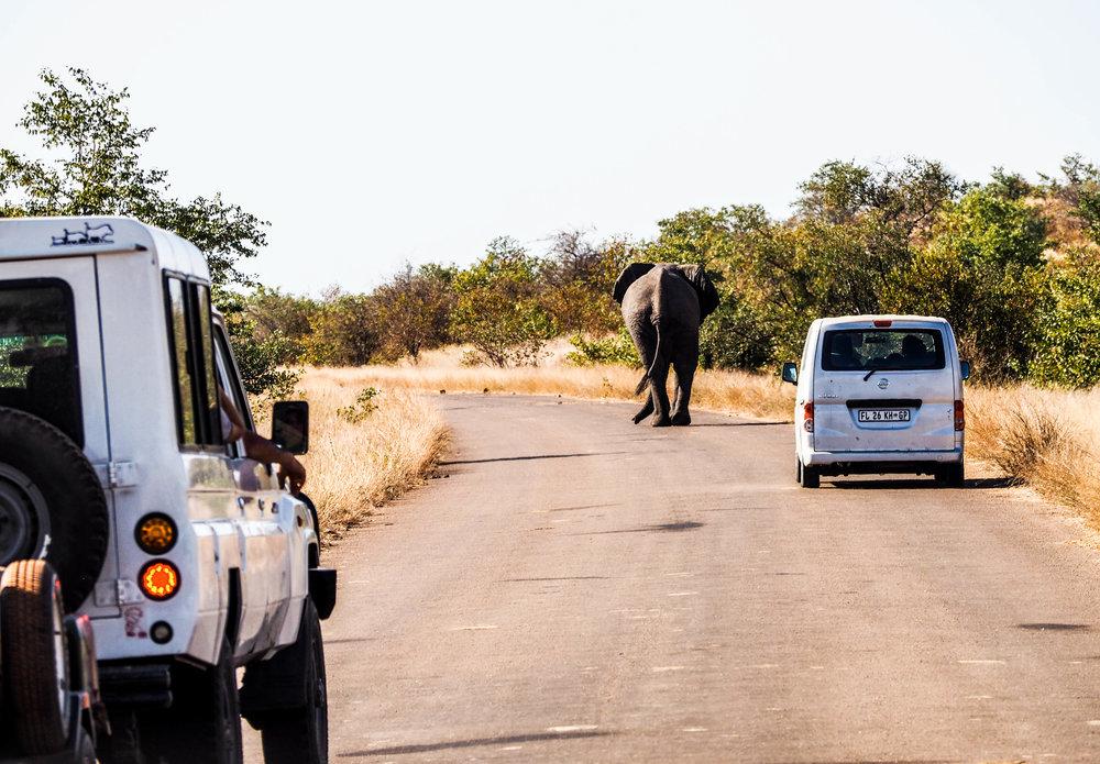 Kruger Drive.jpg