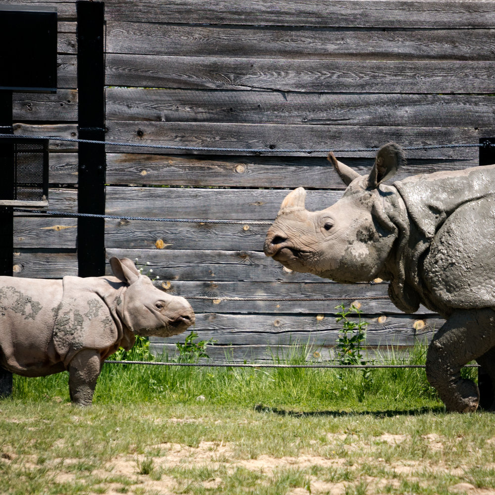 01 babby rhino.jpg