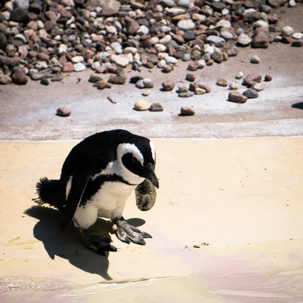 16 penguin.jpg