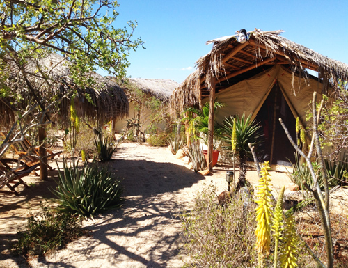 Clarananda - Find information about Clarananda, the location, it's permaculture, and abundant nature of Todos Santos.