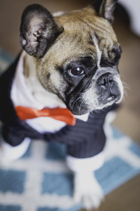 chewy.com for the cutest pup tux ever! I'm pretty sure Jeffery stole the show. Everyone around us kept asking if he was the groom ;D